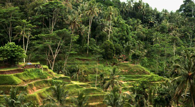 The balinese beginning of new adventure